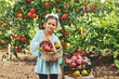 Portrait of a girl with apples .Girl holding a basket of fresh apples