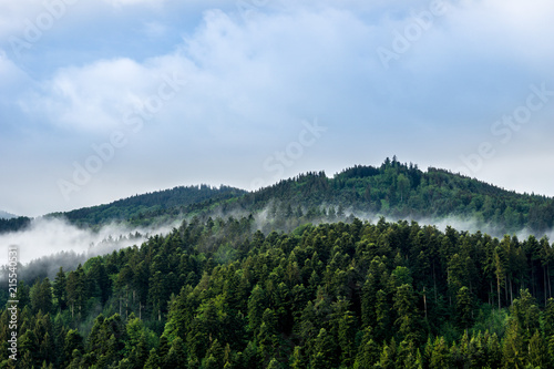 Leinwanddruck Bild Germany, Mystic black forest nature landscape