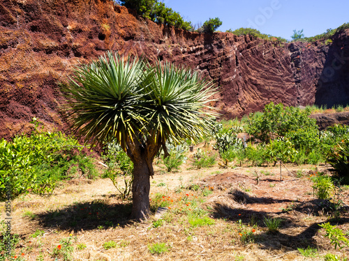 Canvas Diepbruine View to botanical garden and famous millennial tree Drago in Icod de los VInos, Tenerife, Canary Islands