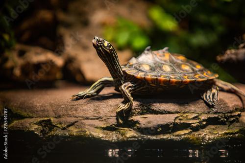 Foto Murales Turtle
