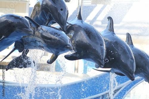Foto Spatwand Dolfijn Dolphins