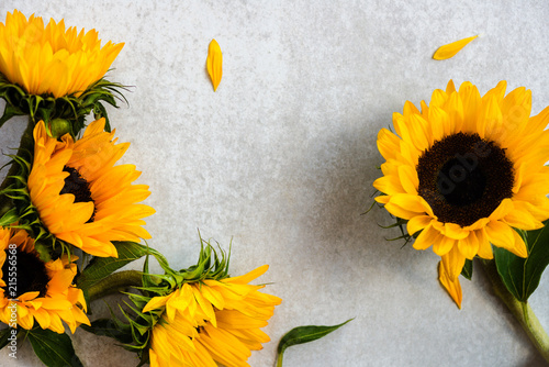 Yellow Sunflower Bouquet on Grey Background, Autumn Concept - 215556568