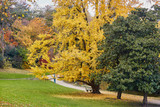 Colorful autumn trees in Montsouris park, Paris, - 215563934