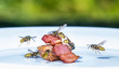 Leinwanddruck Bild - a swarm of wasps flies on a plate and eats fried meat