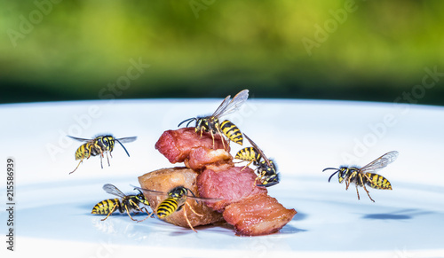 Leinwanddruck Bild a swarm of wasps flies on a plate and eats fried meat