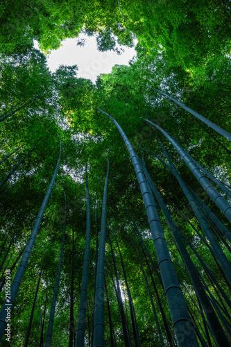 Canvas Bamboe Arashiyama bamboo forest in Kyoto, Japan