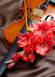 gladiolus and violin. violin and flowers on a silk background.