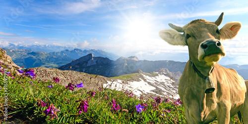 Leinwandbild Motiv Glückliche Kuh in der Schweiz :)