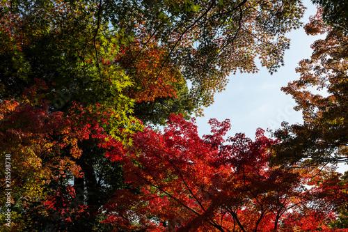 Aluminium Kyoto Autumn at Tenryu-ji temple, Kyoto, Japan