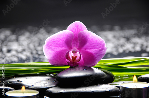 Plexiglas Spa Still life with red orchid with stones, candle and green plant