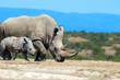 Leinwanddruck Bild - African white rhino