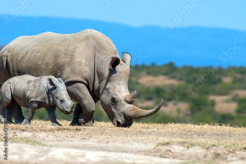 Leinwanddruck Bild African white rhino
