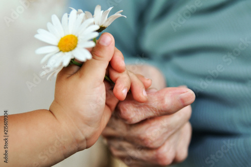 canvas print picture baby hand gives chamomile for older woman on holiday