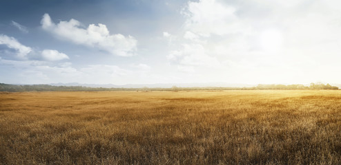 Landscape view of dry savanna