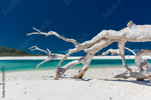 White driftwood tree on amazing Whitehaven Beach with white sand in the Whitsunday Islands, Australia