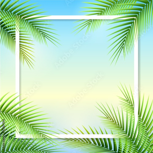 Palm tree leaves on summer background