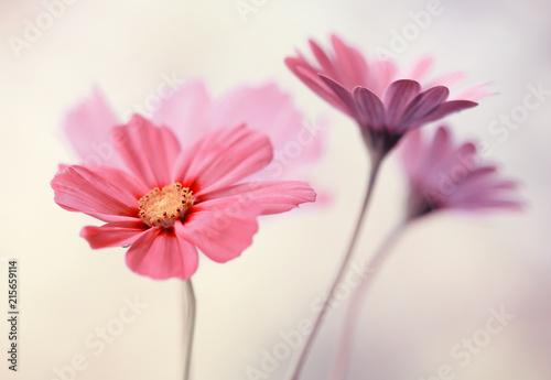 Zdjęcia na płótnie, fototapety na wymiar, obrazy na ścianę : Różowe pastelowe kwiaty
