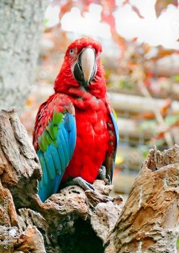 Foto Spatwand Papegaai Bunter Papageienvogel