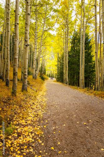 Aluminium Meloen Long scenic forest road, Inner Basin Trail, Flagstaff, Arizona