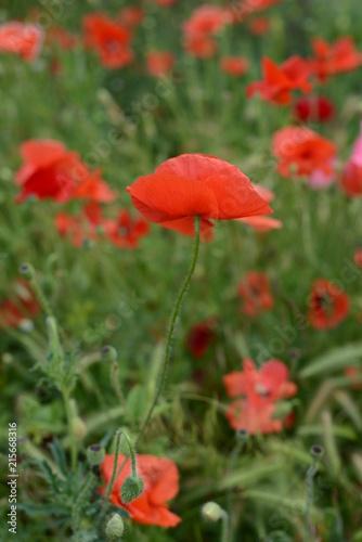 flower mood - 215668316