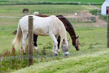 horses grazing with fly masks - 215670582