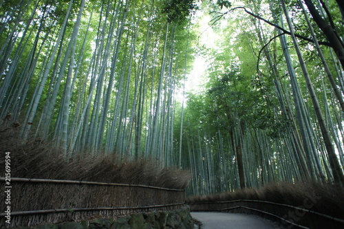 Canvas Bamboe Arashiyama Bamboo Forest