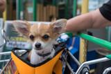 Hund begleitet im Einkaufswagen