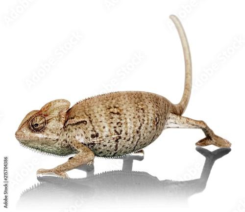 Skradanie się Chameleon