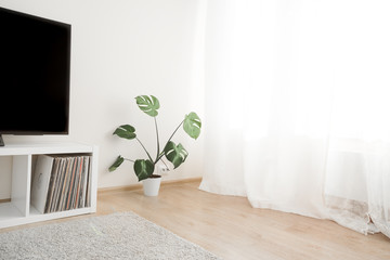 Cozy home interior with TV and monstera palm