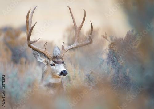 Canvas Hert Beautiful Buck