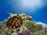 Hawksbill Sea Turtle underwater - 215769135