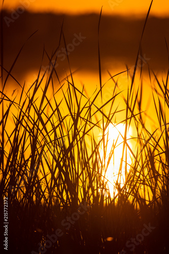 Fotobehang Bruin Reeds on the lake at sunset as a background