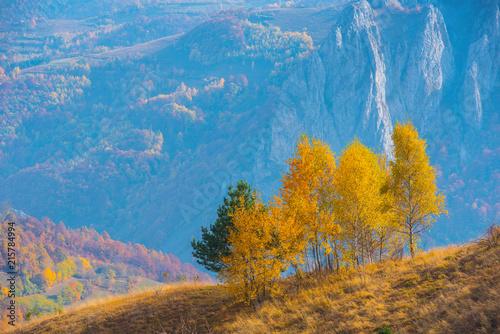 Foto Spatwand Berkenbos Birch trees in the autumn