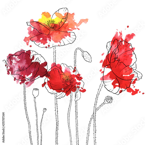 vector drawing poppy flowers - 215787364