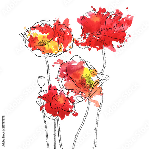 vector drawing poppy flowers - 215787373