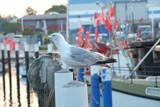 Möwe im Fischereihafen