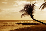 View of nice tropical beach with palm on sunset. Barbados - 215798124