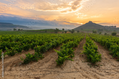 In de dag Wijngaard Vineyard with Davalillo castle as background, La Rioja, Spain