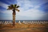 Finikoudes Beach - Larnaca City, Cyprus - 215803702