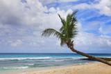 tropical beach - 215806159