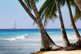 Saona island beach. Dominican Republic - 215811183
