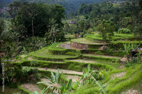 In de dag Rijstvelden Bali rice terraces. Rice fields of Jatiluwih. The graphic lines and verdant green fields. Some of the fields are hundreds of years old.