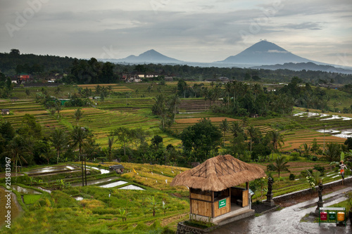 Canvas Rijstvelden Bali rice terraces in mountains in rainy weather. Rice fields of Jatiluwih. Volcano of Gunung Batur and Mount Agung among green rice fields