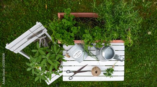 Kräuter und Garten Utensilien auf weißem Holz Hintergrund von oben - 215818108