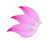 Closeup on lotus petal on white background