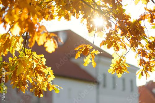 Fotobehang Herfst Beautiful oak leaves on a tree branch on bright autumn day
