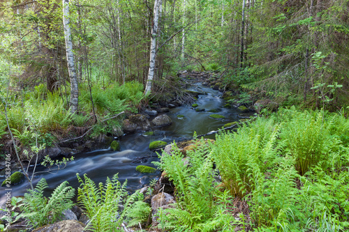 Small stream and ferns in forest Finland nature