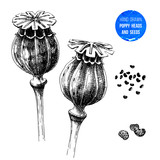 Hand drawn poppy heads and seeds - 215834982
