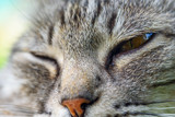 close-up portrait of a gray cat