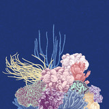 Vector background with colorful coral reef - 215843177